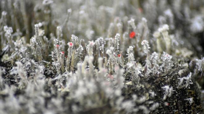 В Ленобласти 13 ноября ожидаются туман и гололедица