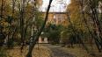 В Петербурге обязали очистить придомовые территории ...