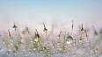 На неделе в Петербурге пойдет мокрый снег