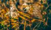 В Петербурге обсудят создание природного заказника в Стрельне