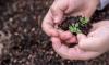Жители Купчино сообщили о массовой краже растений из парков