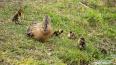 На севере Петербурга птицы начали обзаводиться потомство...