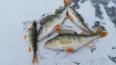 В акватории Нарвы задержаны браконьеры, охотившиеся ...