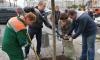 Активисты высадили деревья на площади Восстания