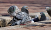 На участке в поселке Репино ввели карантин из-за болезни птиц