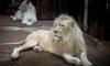 В России будут сажать в тюрьму за торговлю редкими животными
