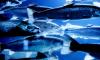 Выборгский район бьет рекорды по добыче рыбы