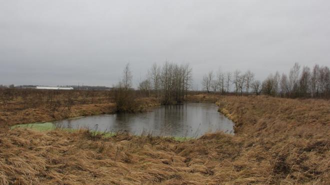 Комиссия по Генплану защитила от застройки Кондакопшинское болото в Пушкинском районе