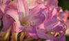 В Ботаническом саду петербуржцам предлагают взглянуть на орхидеи через микроскоп