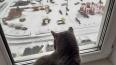 Главный синоптик Петербурга рассказал, какая погода ...