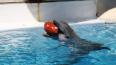 Артисты Петербургского дельфинария скучают по гостям ...