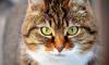 Кошку с паранормальными способностями продают за 1 млн рублей в Омске