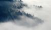 Ленинградскую область окутает туман