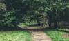 Житель Выборга прятался в кустах, пока неизвестные угоняли его машину