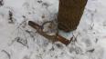 В Павловском парке живодеры ставят капканы на собак: ...