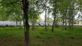 В челябинском лесу нашли десятки новых иномарок