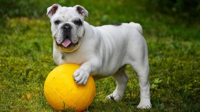 Гатчину оборудуют площадками для собак
