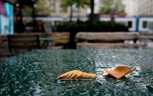 В Петербурге в понедельник ожидаются дожди с ветром