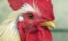 Китай напугала смерть 26-летней женщины от птичьего гриппа
