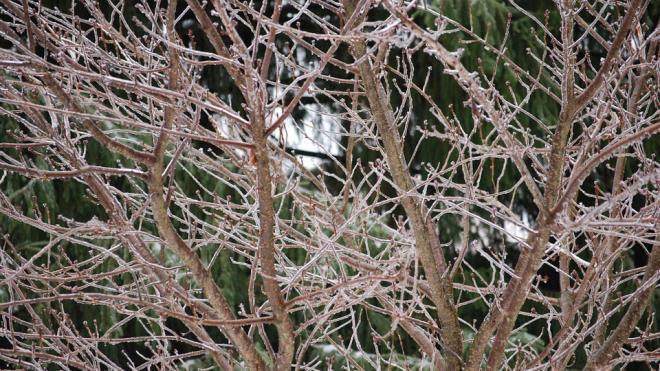 Циклон принесет в Петербург мокрый снег и аномальный холод