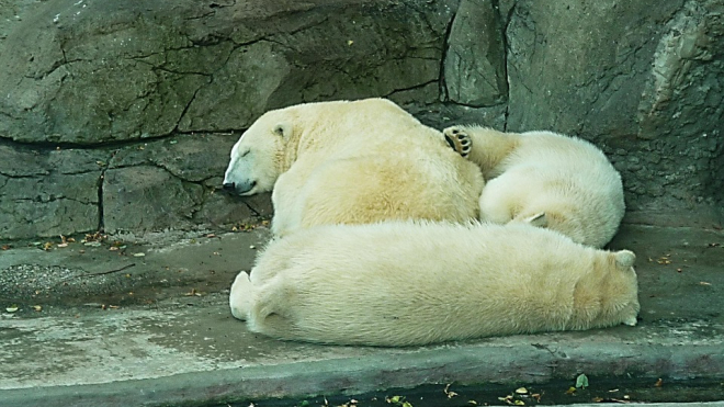Новый год в Ленинградском зоопарке