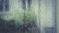 Дождливое воскресенье ожидается в Ленобласти 13 октября
