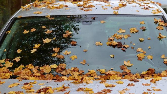 В пятницу в Петербурге пройдет небольшой дождь