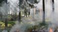 За незаконной вырубкой леса и лесными пожарами будут ...