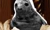 """Как неудачный """"побег"""" тюленя в Петербурге превратился в мем"""