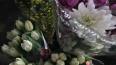 Петербургские ретейлеры уничтожили тысячи тюльпанов, ...