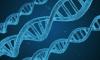 Ученые выявили причину возникновения рака крови