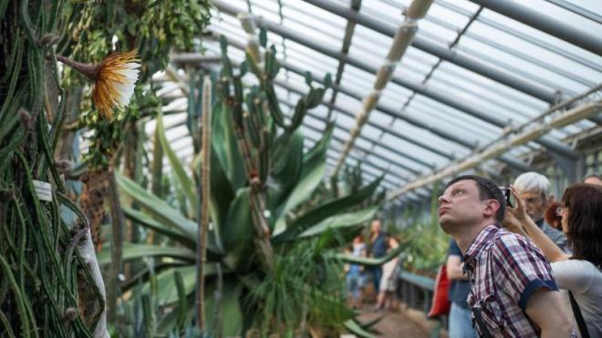 Ботанический сад продлил время работы из-за распустившейся Царицы ночи
