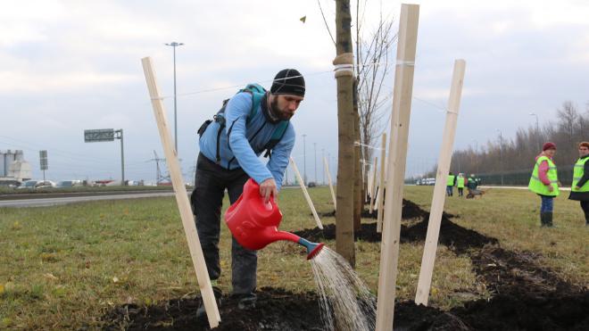 Смольный научит петербуржцев правильно сажать деревья в городе