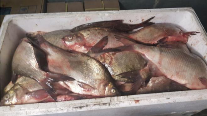 На петербургском заводе нашли 200 кг просроченной рыбы