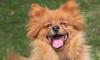 Артема Дзюба подарил 9-летней болельщице щенка