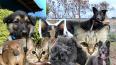 Петербург. Три истории приютов для бездомных животных ...
