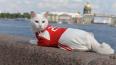 Кот-оракул Ахилл одобрил Декларацию обращения с животным...