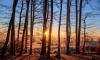 В 2018 году в Петербурге высадили почти 12 тысяч деревьев