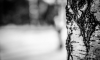 Сорвавшегося с дерева второклассника госпитализировали в тяжелом состоянии