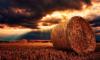 В Ленобласти заготовят 388 тысяч тонн сена