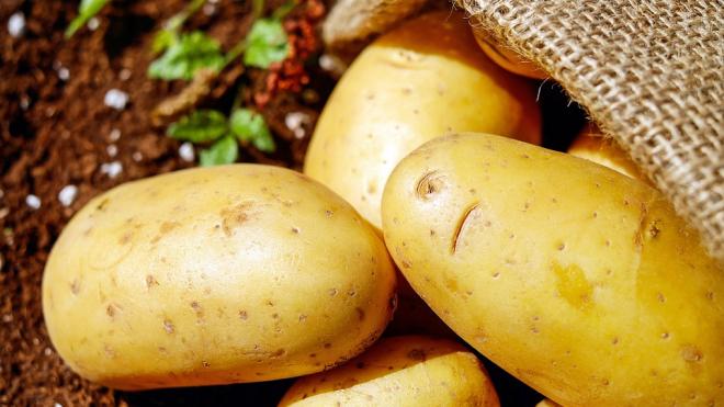 В популярных российских магазинах обнаружили зараженный картофель