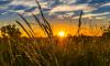 Этот май для Выборгского района стал самым жарким за 102 года