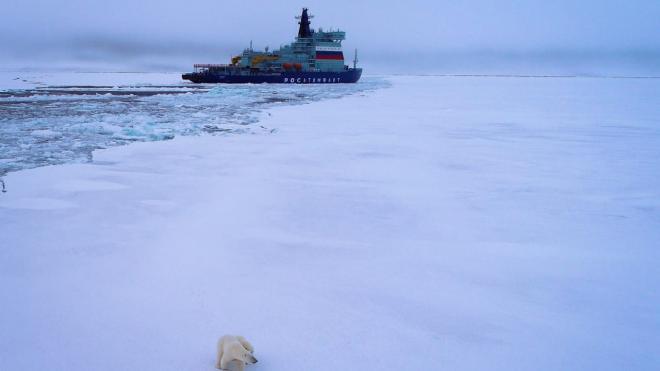Смольный: Петербург может стать координирующим центром освоения Арктики