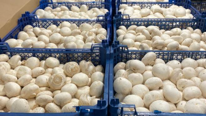 На овощной базе в Петербурге арестовали 10 тонн шампиньонов, помидоров и огурцов