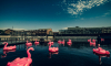 В Новой Голландии открылся пляж с надувными фламинго
