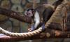 8 марта в Ленинградском зоопарке устроят День матери