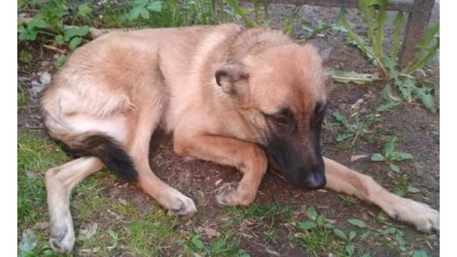 В Колпино пьяный хозяин выбросил из окна многоэтажки собаку