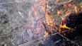 Сожженного в Волховском районе человека надеются идентиф...