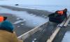 В Сосновом Бору спасали дрейфующую на льдине собаку