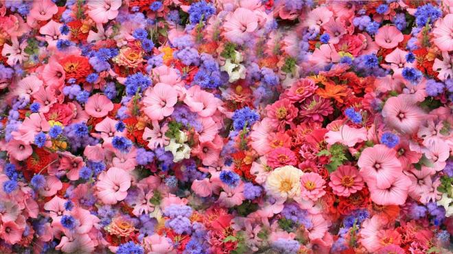 К 9 мая Петербург украсят 400 тысяч цветов виолы